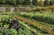 Potager with rows of kale, dahlias, strawberries, asparagus, grape vine
