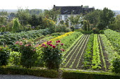 Rows of vegetables and salads, dahlias, marigolds