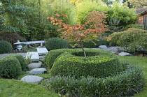 Acer japonicum 'Aconitifolium' in box surround, Liriope muscari, stepping stone path to stone lantern and bench, bamboo