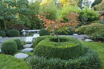Acer japonicum 'Aconitifolium' in clipped box surround, Japanese stone lantern and bench, Liriope muscari