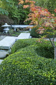 Acer japonicum 'Aconitifolium' in clipped box surround, path to Japanese stone lantern and bench