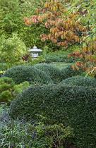 View to Japanese stone lantern, Liriope muscari, Cornus kousa var. chinensis