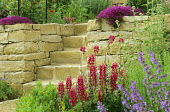 Terraced garden, stone steps, dry-stone walls, nepeta, lupins, thyme, alpines