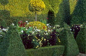 Box pyramids, Ilex x altaclerensis 'Golden King' standard topiary, cosmos, daisies, nicotiana