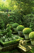 Topiary garden, spiral box, stone lion, box balls in containers, ivy-covered trellis