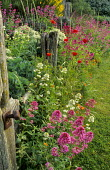 Centranthus ruber, Crambe maritima, Papaver rhoeas, breakwater fence