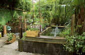 Town garden, raised pond, planted junk containers, Trachycarpus fortunei, green wall