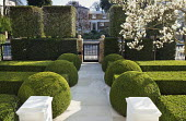 Formal front garden, gate, clipped box shapes, yew hedge, Quercus ilex cuboids, Magnolia x soulangeana, Portland stone path