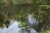 Natural pond, reflections