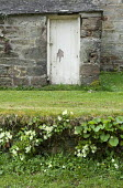 Stone wall with primroses growing in the wild, doorway