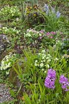 Hyacinthus orientalis, Primula vulgaris, euphorbia