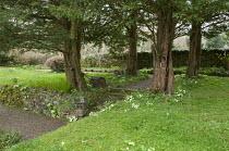 Yew tree quadrant