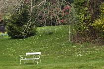 White bench under tree, naturalised primroses