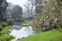 View to ponds, magnolia