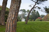 View across lawn to Edwardian summerhouse, Scots pines, rhododendrons