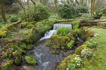 Waterfall, moss-covered rocks, primroses