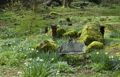 Metal bench amongst moss-covered rocks, daffodils and tree ferns