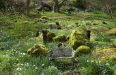 Bench in woodland, moss-covered rocks, daffodils