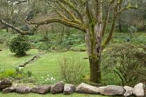 View to woodland garden, stream, rocks