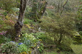 View to bench in woodland garden, hellebores, rhododendrons