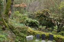 Gravestones for pets, camellias in woodland garden