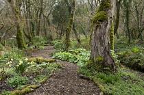 Bark mulch path through woodland, log edging
