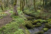 Bark mulch path through woodland, log edging, mossy rocks in stream