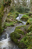 Waterfall and stream through woodland, moss-covered rocks