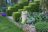Clipped box hedges, steps to house, chimney pot, tulips, saxifrage