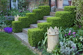 Clipped box hedges, steps to house, chimney pot, tulips