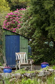 Rustic shed, wooden chair, rhododendron, Podocarpus salignus