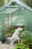 Wood framed plastic greenhouse, watering cans