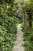 Large paving slab path, holly, Rhododendron 'Elizabeth'