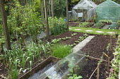 Kitchen garden, leeks, chives, glass cloches, view to greenhouse