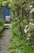 View along gravel path to wooden chair, apple blossom