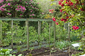 Fruit cages in kitchen garden, rhododendrons