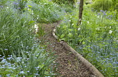 Log edged bark chippings path through shady borders, forget-me-nots, daffodils
