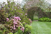 Rhododendrons and magnolia