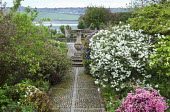 Sundial, rhododendrons