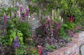Brick raised bed with lupins, berberis, heuchera, wallflowers, diascia, aquilegias, fig tree on wall