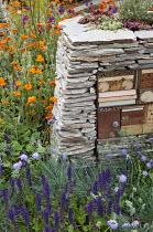 Dry-stone wall with wildlife habitats, Geum 'Prinses Juliana', knautia, salvia, sempervivums