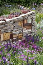 Sempervivums planted in dry-stone wall with wildlife habitats, Salvia nemorosa, geranium, knautia, Armeria maritima
