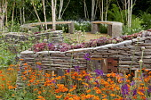 Sempervivums planted in dry-stone wall with wildlife habitats, Verbascum phoeniceum 'Violetta', Geum 'Prinses Juliana', wooden benches on circular terrace