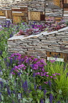 Dry-stone wall with wildlife habitats planted with sempervivums, Armeria maritima, Salvia nemorosa