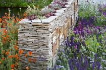 Sempervivums planted in dry-stone wall with wildlife habitats, Geum 'Prinses Juliana', Salvia nemorosa, knautia, Armeria maritima