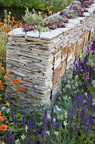Sempervivums planted in dry-stone wall with wildlife habitats, Geum 'Prinses Juliana', Salvia nemorosa, knautia