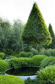 Clipped Carpinus betulus standard pyramid underplanted with domes of box and grasses, raised circular pool, Hakonechloa macra