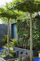 Living green vertical wall, Begonia rex 'Escargot', Epimedium rubrum, Tiarella 'Ninja', Lamium 'Beacon Silver', viola, umbrella trained Platanus acerifolia syn. Platanus x hispanica, water fountains