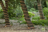 Strip LED lights wrapped around tree trunks