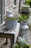 Herbs in metal bucket, milkchurns